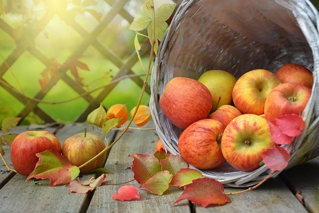 a barrel of fall apples
